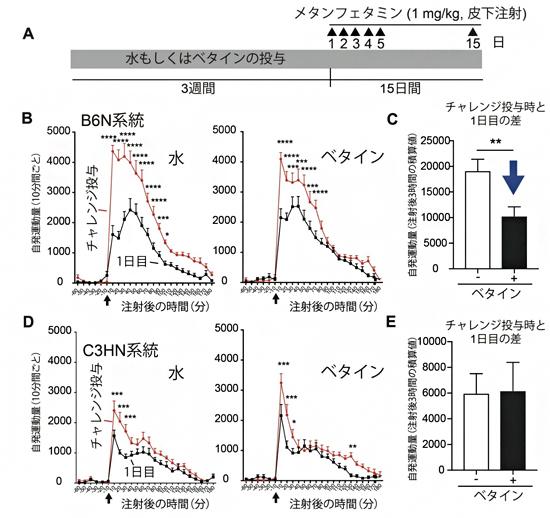 マウスにおけるメタンフェタミンを用いた行動感作に対するベタインによる作用の図