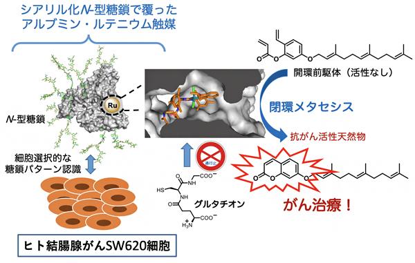 抗がん活性天然物の触媒的「現地合成」によるがん治療の図