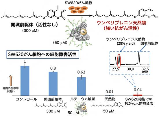 アルブミン・ルテニウム触媒へのN-型結合糖鎖の導入とがん選択的な細胞障害の図
