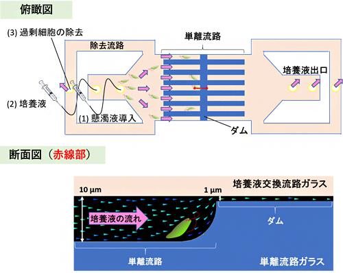 ガラス製マイクロ流体チップのデザインの図