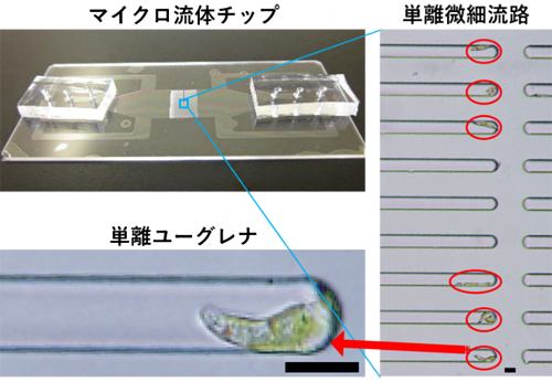 ガラス製マイクロ流体チップの写真の図