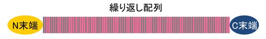 シルクタンパク質の模式図の画像