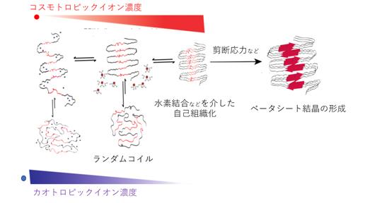 シルクタンパク質の繰り返し構造がイオンから受ける影響の模式図の画像