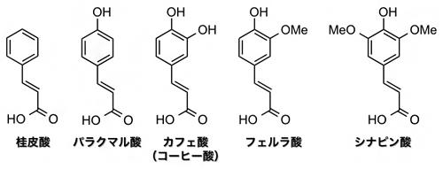 桂皮酸、カフェ酸などリグニンの熱分解で生成するフェノール誘導体の一部の図