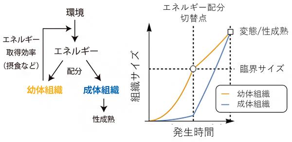 エネルギー配分モデルの図