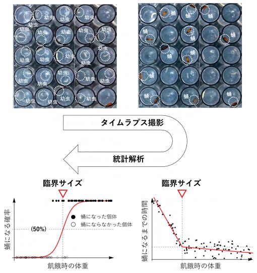 飢餓実験のタイムラプス撮影と統計解析の図