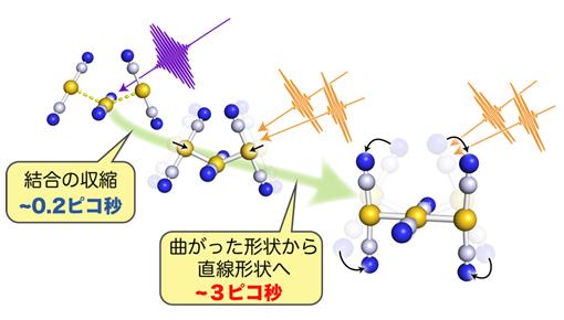 ジシアノ金錯体の会合体における結合生成過程とそれに伴った分子構造の変化の図