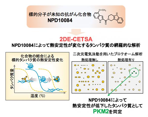 「2DE-CETSA」によるNPD10084の標的タンパク質の解析の図