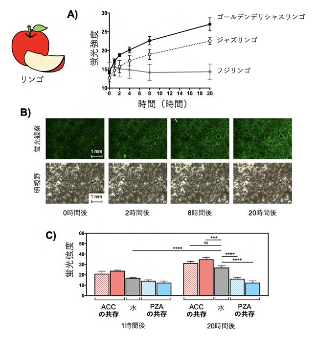 リンゴで産生されるエチレンの検出の図