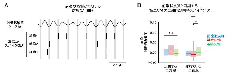 遠隔記憶想起時の海馬二細胞の同時スパイク発火の図