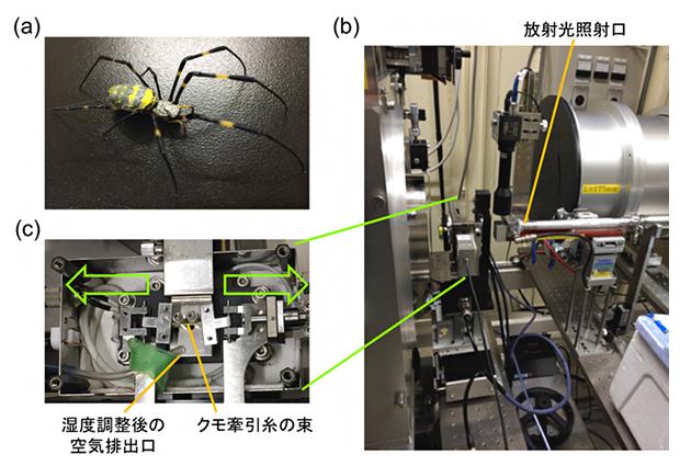 本研究における実験系の図