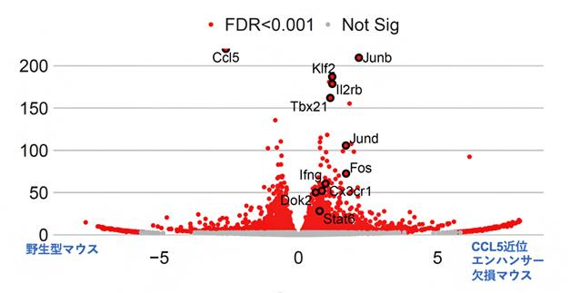 マウス肺に定住するナチュラルキラー細胞のRNA-seq結果の図