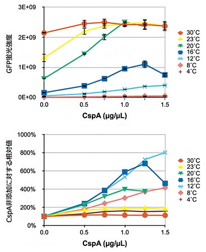 各反応温度におけるCspAタンパク質添加濃度とGFPタンパク質発現量の関係の図