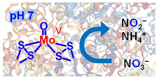 生体酵素が持つオキソモリブデン構造(左)は、硝酸イオン(NO3-)の図