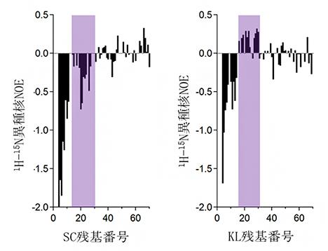 遠縁酵母由来の可溶性のSup35タンパク質の短い天然変性領域における動きの違いの図