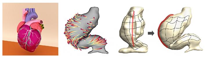 発生初期の心臓の外形変化と細胞の軌道計測に基づく組織変形動態の再構成の図