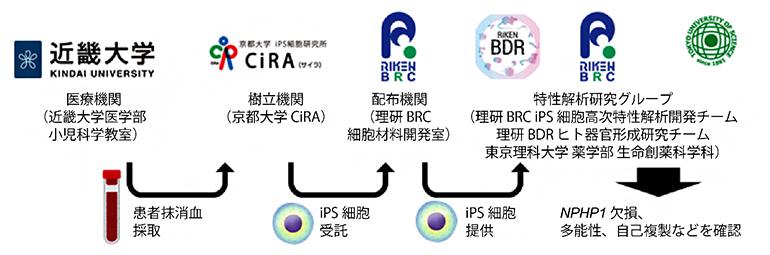 本研究における他機関との連携の図