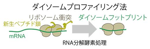 ダイソームプロファイリング法の概略の図