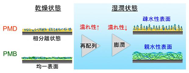 ポリマーコーティング膜の水和挙動の図