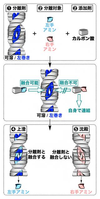 らせん超分子ポリマーによる左手分子と右手分子の分別の図