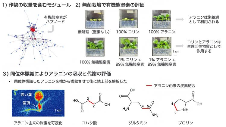 作物生育に及ぼす有機態窒素の影響の図