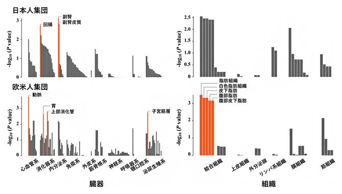 虚血性心疾患の発症に関わる臓器・組織の人種間の比較の図