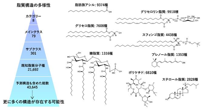 脂質構造の多様性の図