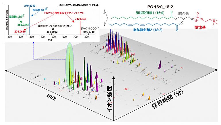 質量分析データの概略と脂質構造とMS/MSスペクトルの関係の図