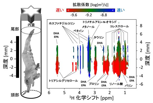 スジエビの疑似2次元SMOOSYスペクトル画像の図