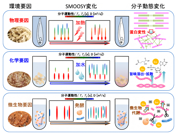 環境要因による水産食品の食感・呈味変化の分子動態解析の図
