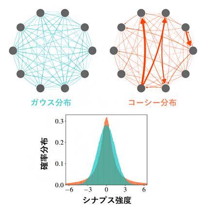 神経ネットワークの模式図とシナプス強度の確率分布の図