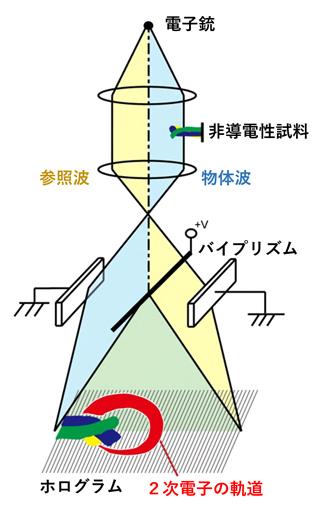 電子線ホログラフィーの原理図と観察された2次電子の軌道の図