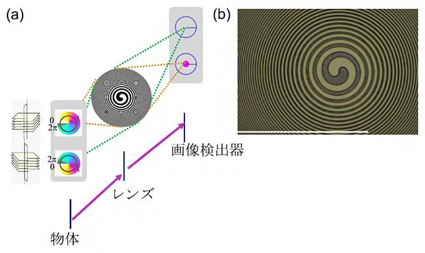 実験手法の概念図の画像