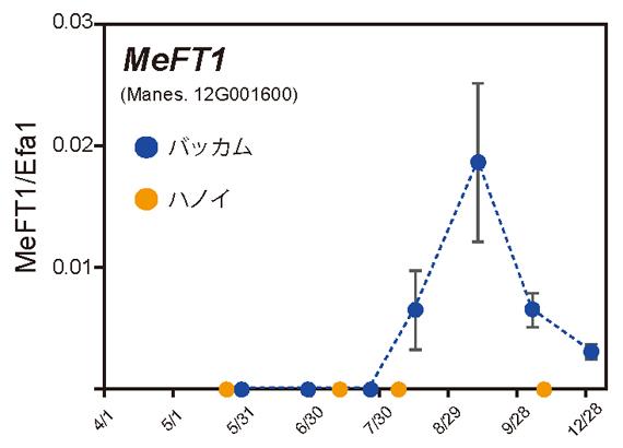 開花ホルモン遺伝子の発現変化の図
