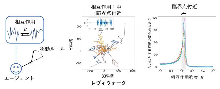 左から、数理モデルの枠組み、2次元空間におけるレヴィウォーク、入力に対する行動の変化の図
