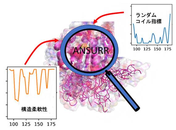 ANSURR法の概念図