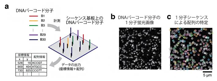 30種類のDNAバーコード分子の空間解析例の図