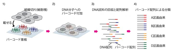 次世代シーケンサーを活用する従来の遺伝子空間分布解析の図