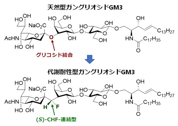 開発したガングリオシドGM3の(S)-CHF連結型アナログの構造式の図