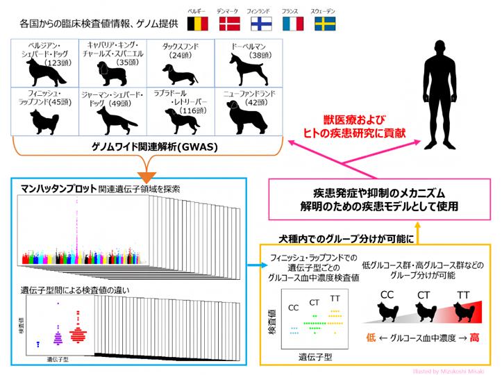 イヌのゲノム研究は獣医療だけでなくヒトの医療にも貢献するの図