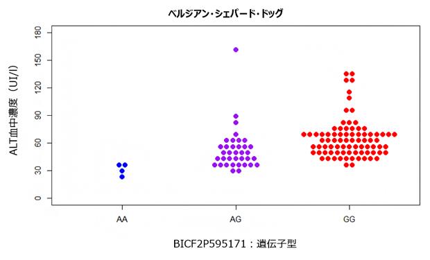 ベルジアン・シェパード・ドッグのALT血中濃度における遺伝子型間の違いの図
