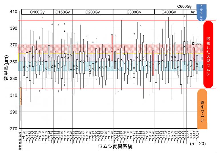 大型変異系統のサイズ分布図の画像