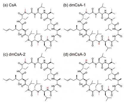 本実験に用いた四つの環状ペプチドの構造式の図