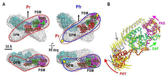 可視化されたPr型とPfr型の構造モデルと光センサーモジュールに内在した運動の図