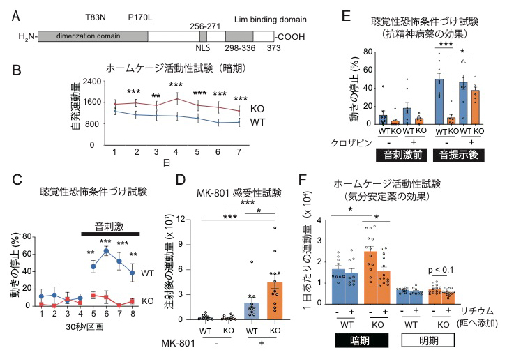 LDB2タンパク質の構造とLdb2 KOマウスに見られる精神疾患関連行動変化の図
