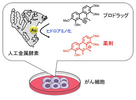 アルブミンと金触媒からなる人工金属酵素を用いたがん細胞での薬剤合成の図