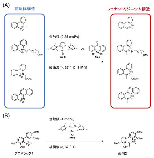 金触媒によるフェナントリジニウム構造の構築の図