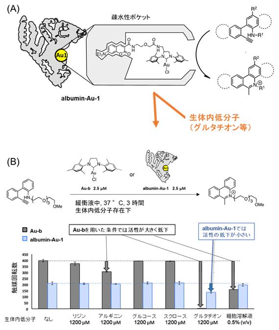 金触媒を用いたアルブミン人工金属酵素の開発の図
