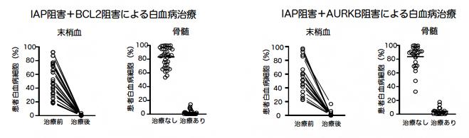 白血病ヒト化マウスにおける2種類の阻害剤の同時投与による効果の図