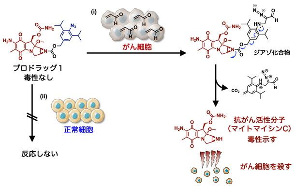アジド基とアクロレインの環化付加反応によるプロドラッグ1のデザインの図
